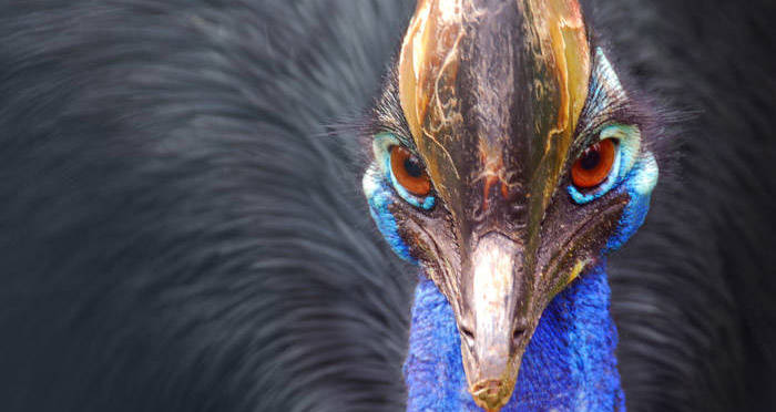 25 Of The World's Most Dangerous Animals And How They Would Kill You