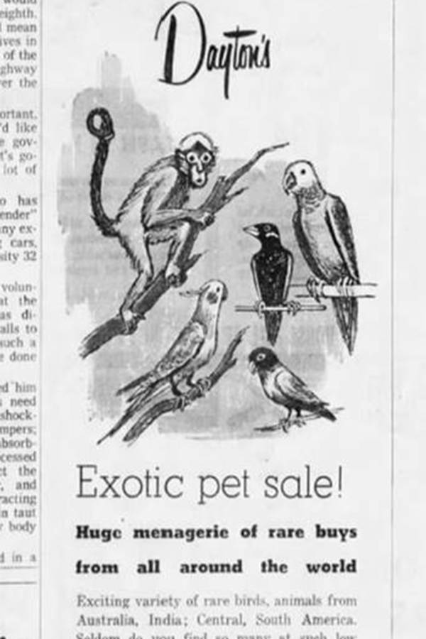 Daytons Exotic Pet Sale