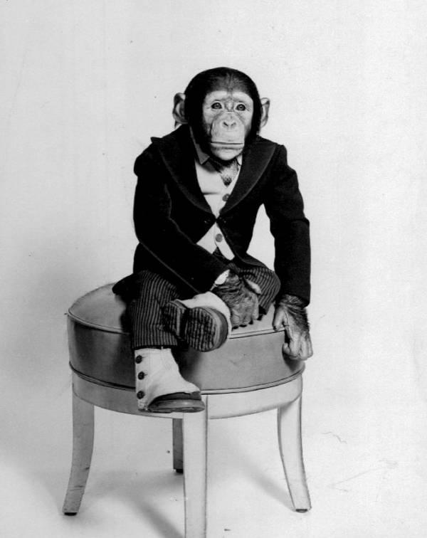 Fred Muggs Portrait 1955