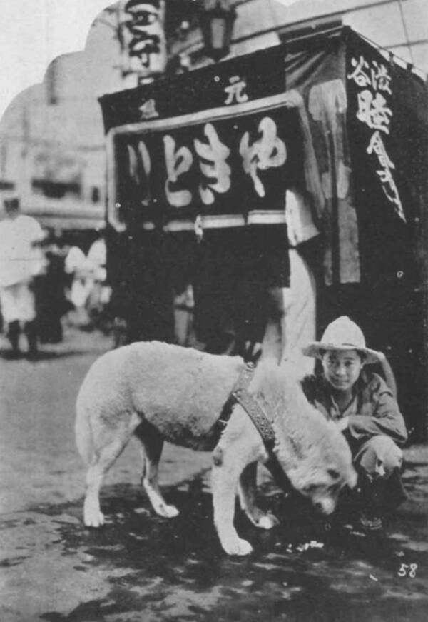 Hachiko And A Stranger