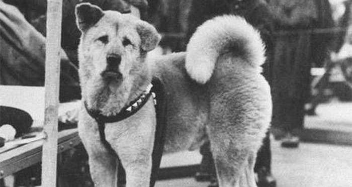 The Heartbreaking Story Of Hachiko - The World's Most Loyal Dog
