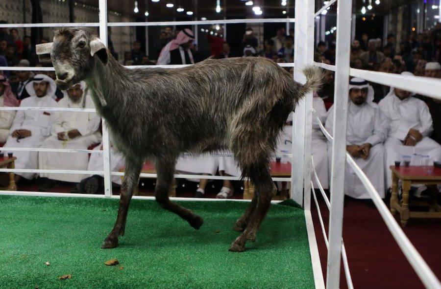 Jordan Goat Auction Crowd
