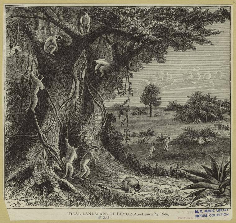 Landscape Of Lemurs