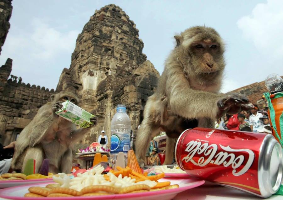 Bizarre Festivals Monkey Buffet Festival