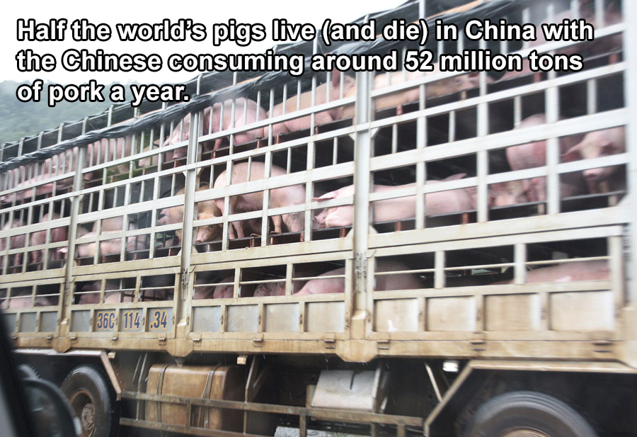 Pig Consumption In China