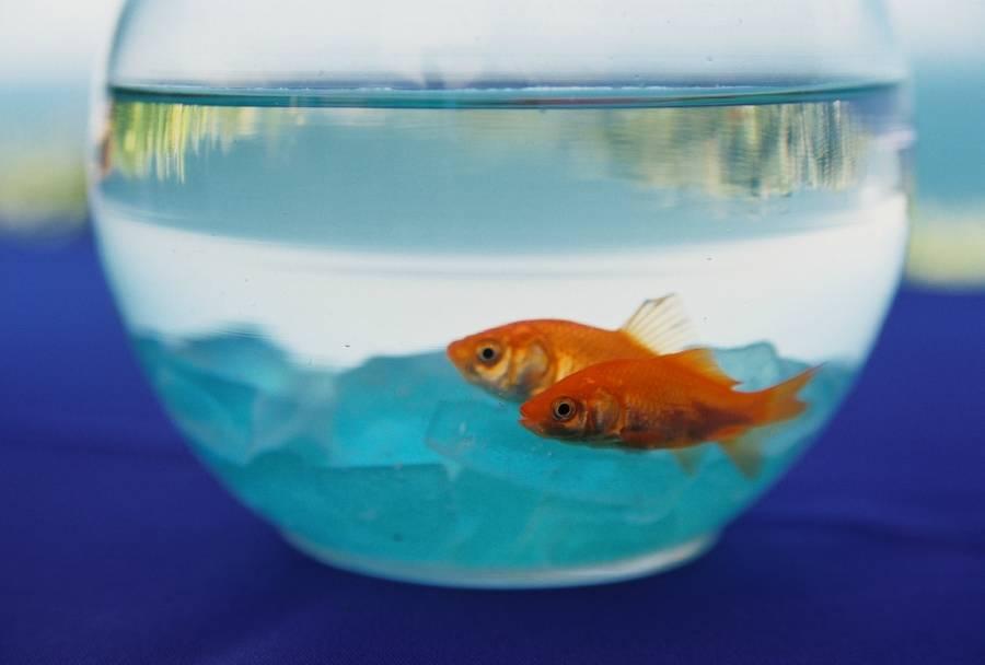 Round Fishbowl