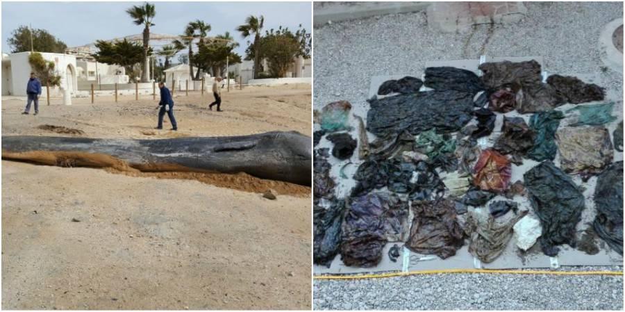Whale Plastic Spain