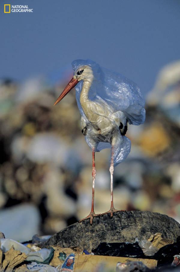 Bird Stuck In Plastic Bag