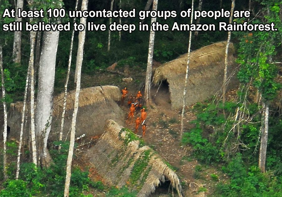 Interesting Facts About Brazil Tribe