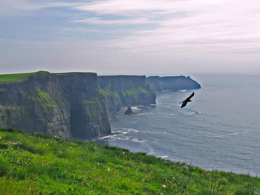 Cliffs Of Moher Wildlife