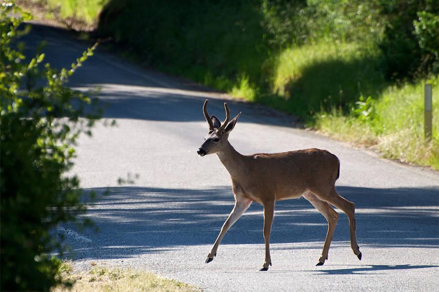 Deer Crossing Street