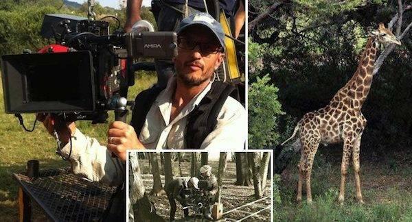 Giraffe Carvalho Africa
