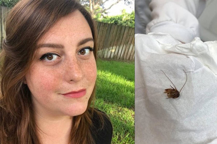 Holley Cockroach