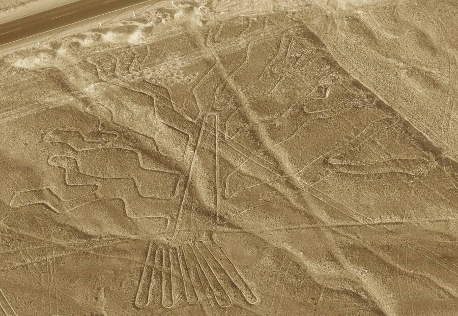 Peru Nazca Lines Tree