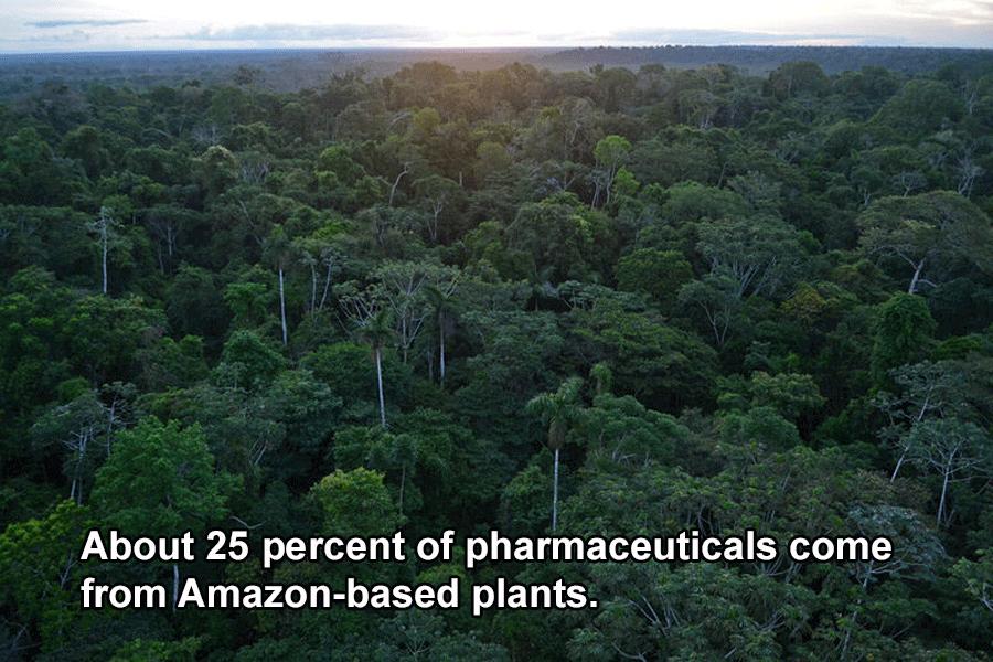 Rainforest Drugs