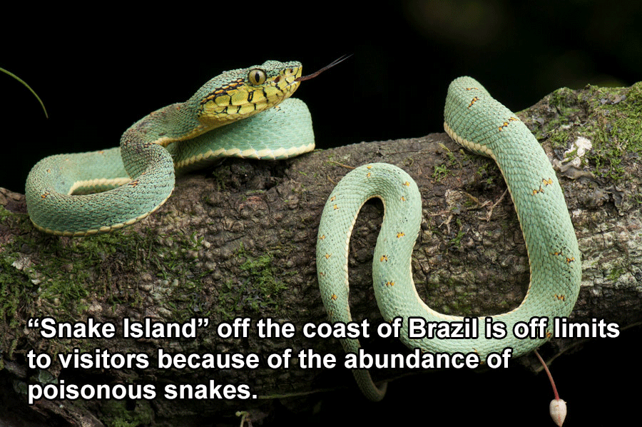 Brazil Facts Snake Island