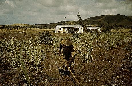 St. Croix Sugar Fields