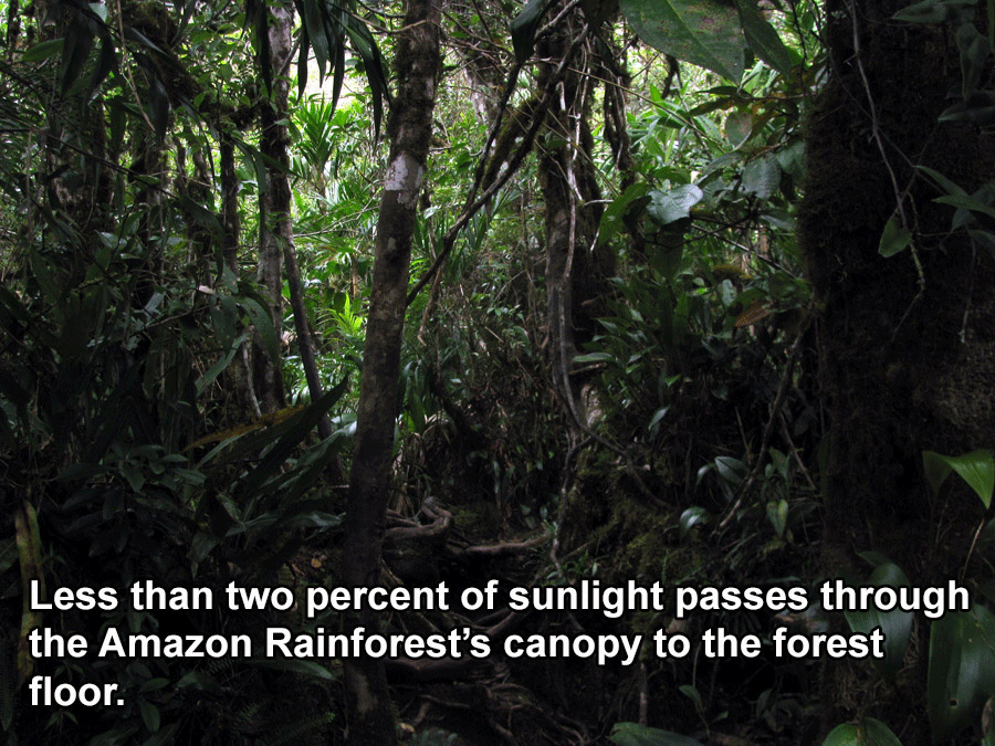 Interesting Brazil Facts Rainforest