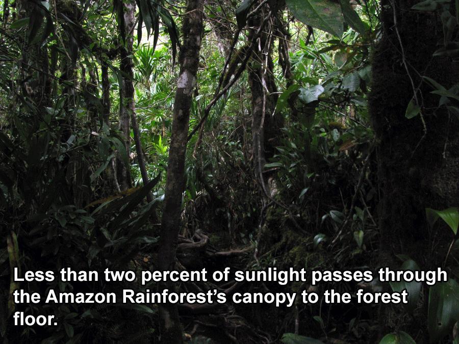 Interesting Brazil Facts Rainforest