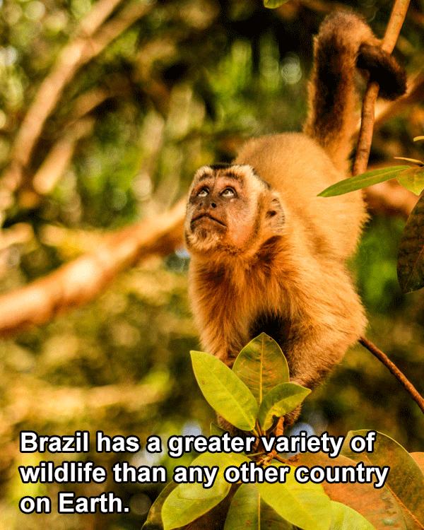 Wildlife Amazon