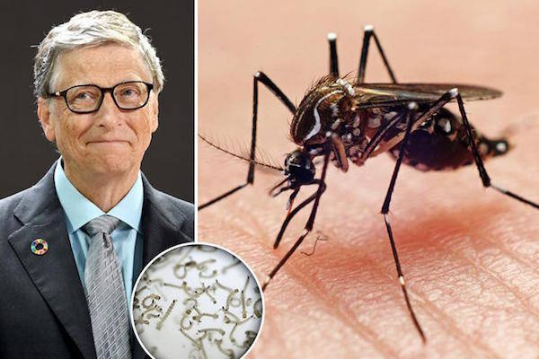 Bill Gates Malaria Science