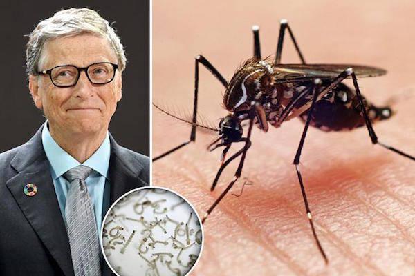 Bill Gates Malaria Science
