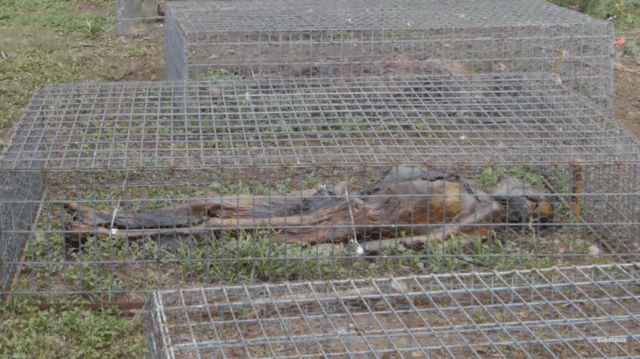 Body In Wire Cage