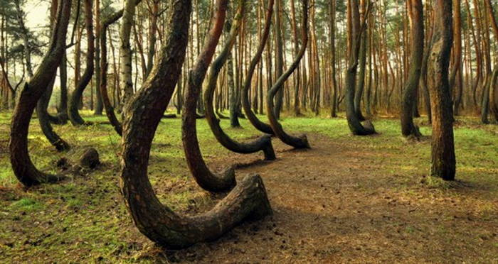 Why Poland S Crooked Forest Of Krzywy Las Is Crooked,Best Paint For Bathroom Ceiling To Prevent Mold Australia