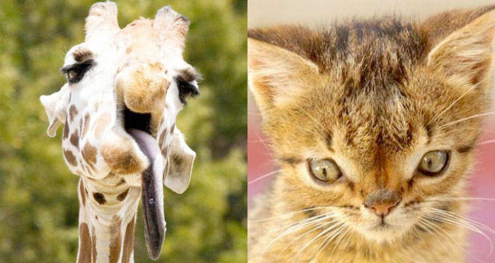 Animals With Down Syndrome: Debunking This Mistaken Trend