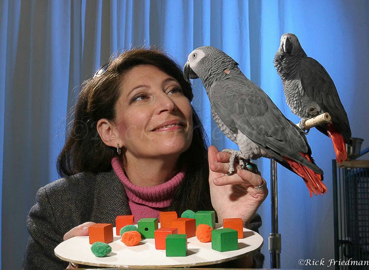 Irene Pepperberg With Alex The Parrot