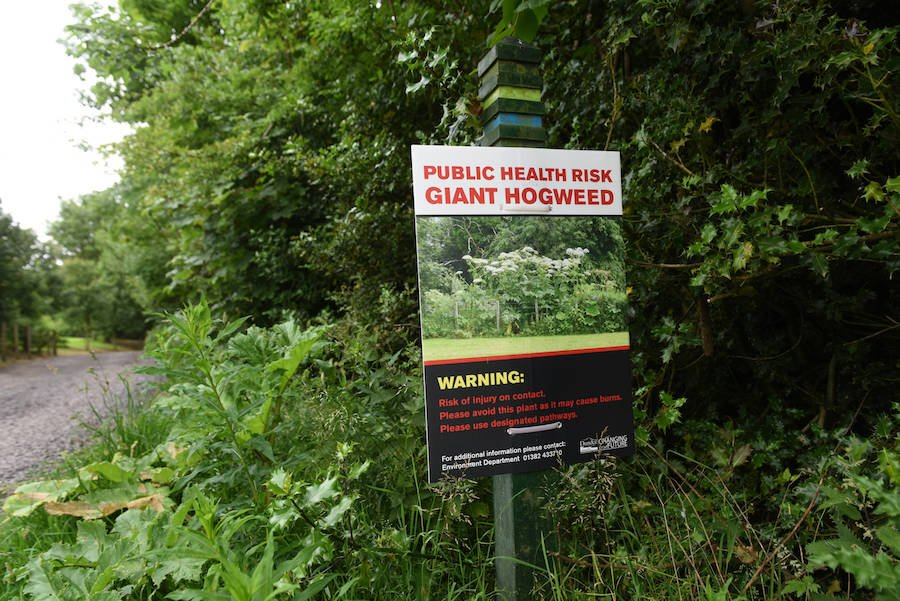 Warning About Hogweed Plants