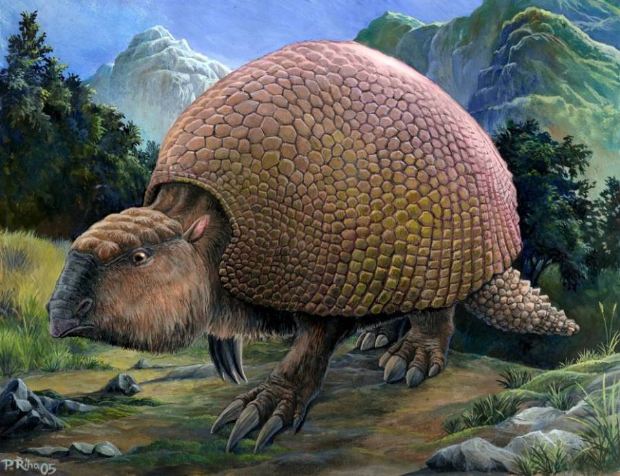 f340cbde0c4d6 Glyptodon  The Prehistoric Armadillo That Was The Size Of A Car