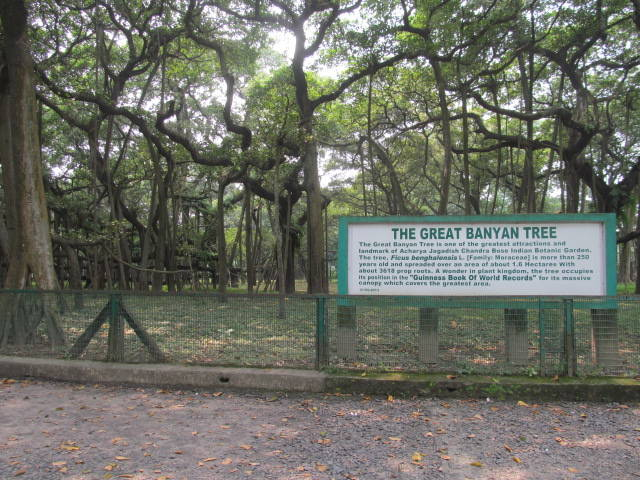 Banyan Tree Sign