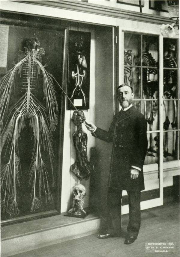Nervous System Of Harriet Cole