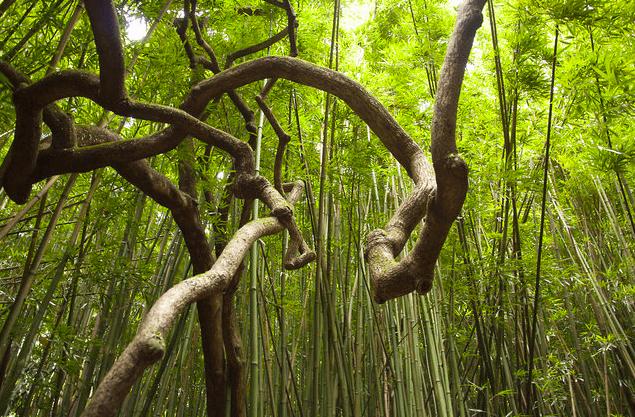 Krzywy Las Forest