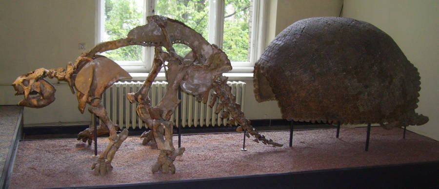 Skeleton And Shell Of A Prehistoric Armadillo