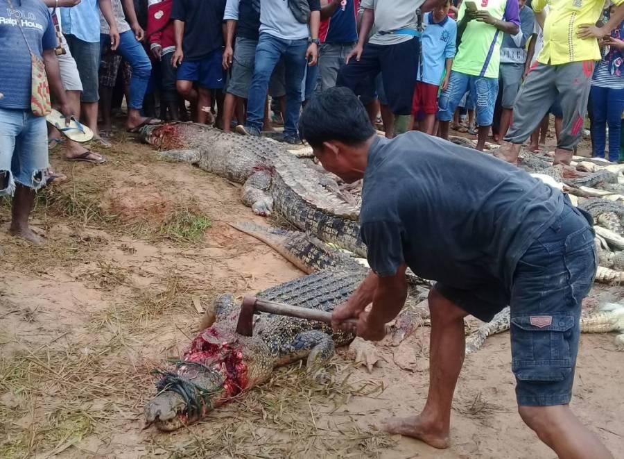 Man Hitting Crocodile