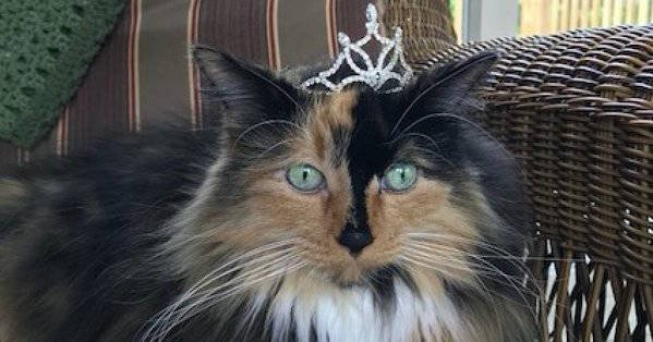 Michigan Town Elects Cat Mayor