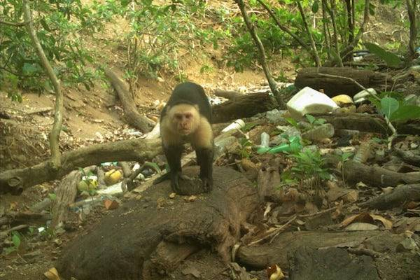 Panama Monkeys Stone Age