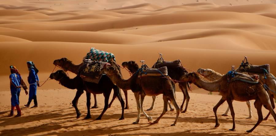 Berber Camel Caravan