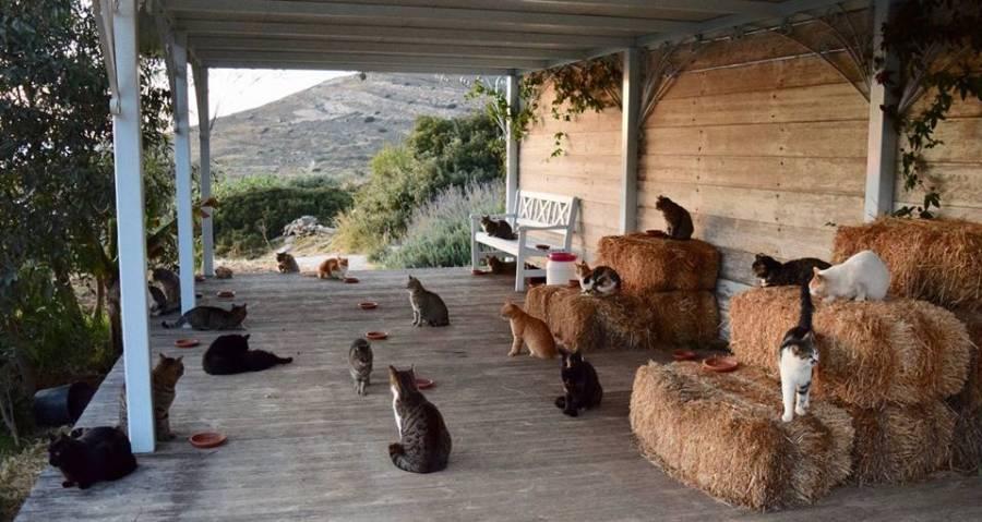 Cat Sanctuary On Stunning Greek Island Posts Dream Job Caretaker Position