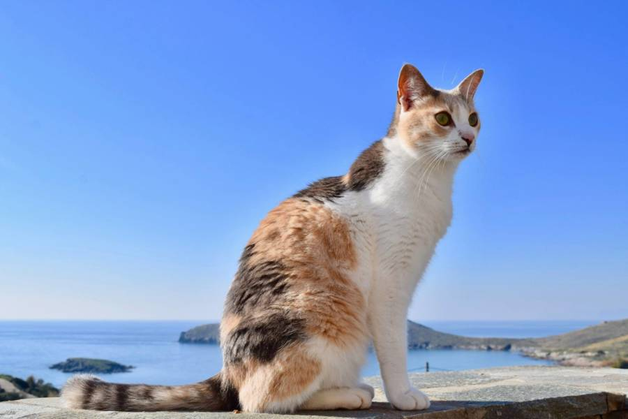 Cat Standing On Ledge