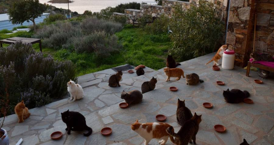 Cats Outside Sanctuary