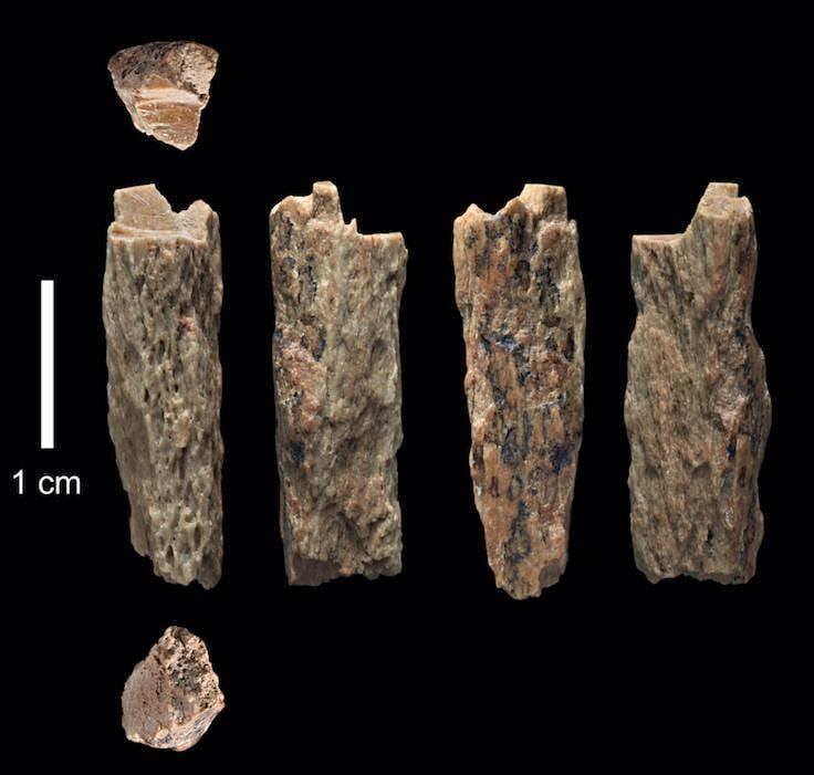 Denisovan Neanderthal Bone