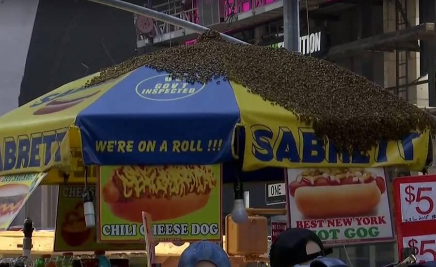 Hotdog Stand Swarm Bees