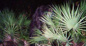 Og Image Skunk Ape