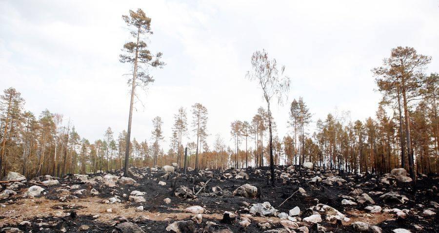 Sweden Wildfire