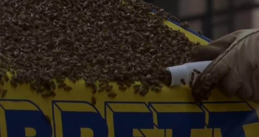 Vacuum Bees