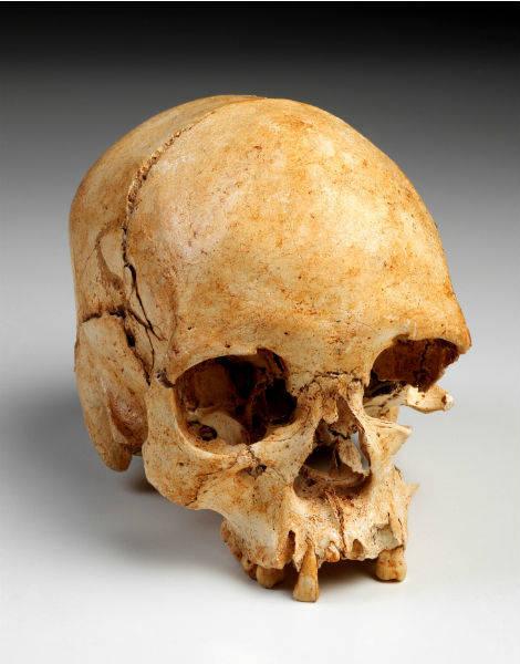 Skull of Luzia
