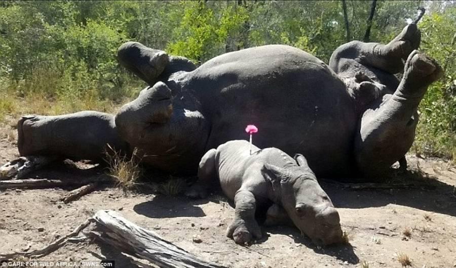 Arthur Rhino Mom
